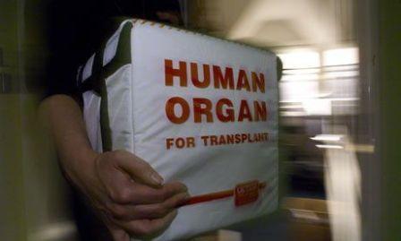 Transplante organo1